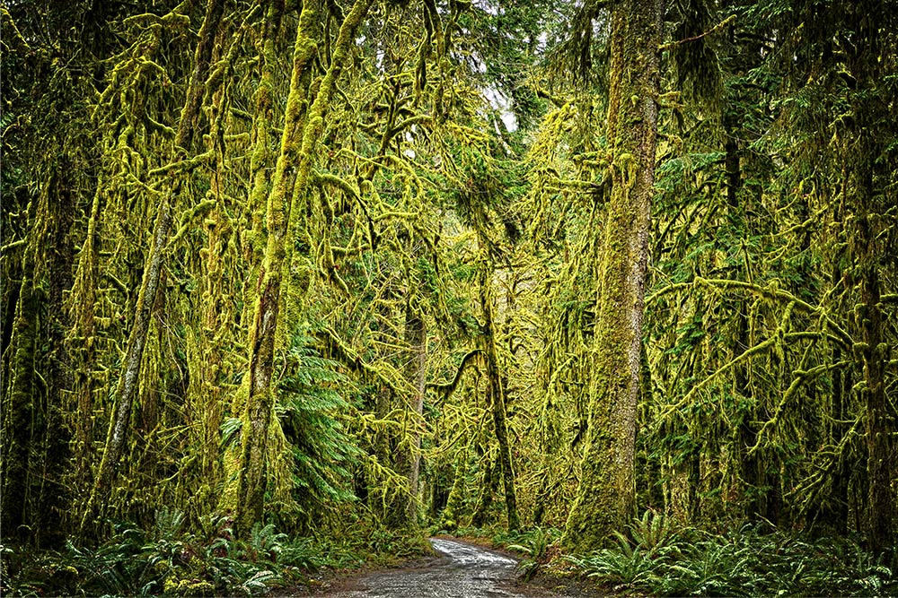 Quinault Rainforest Tour