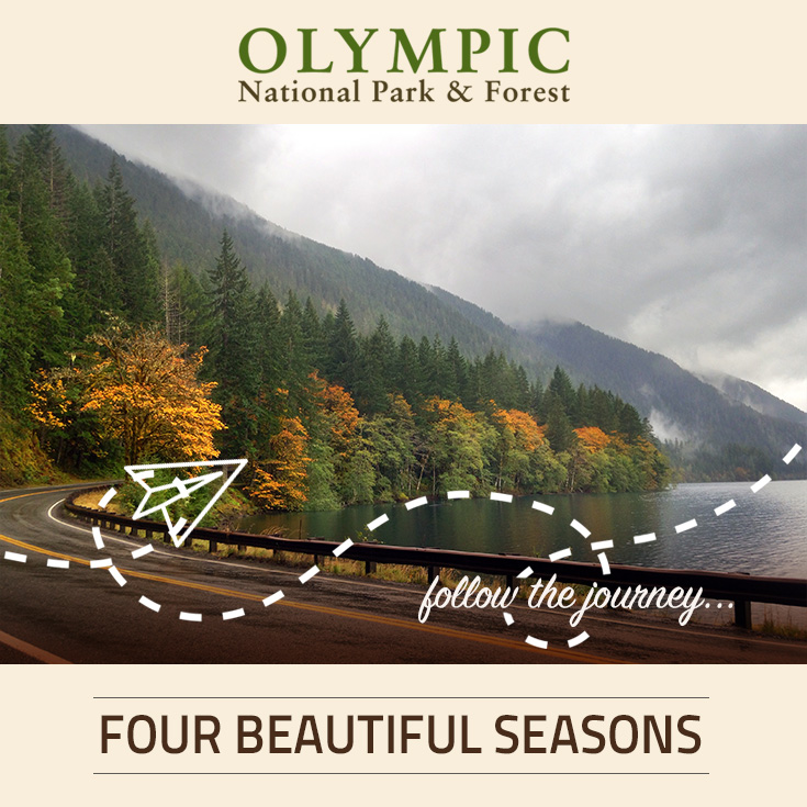 Seasons at olympic national park forest olympic for Cabin rentals olympic national forest