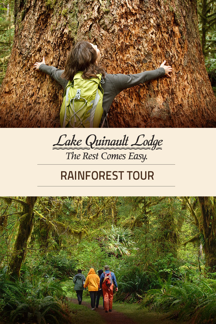 Lake Quinault Rainforest Tours Olympic National Park