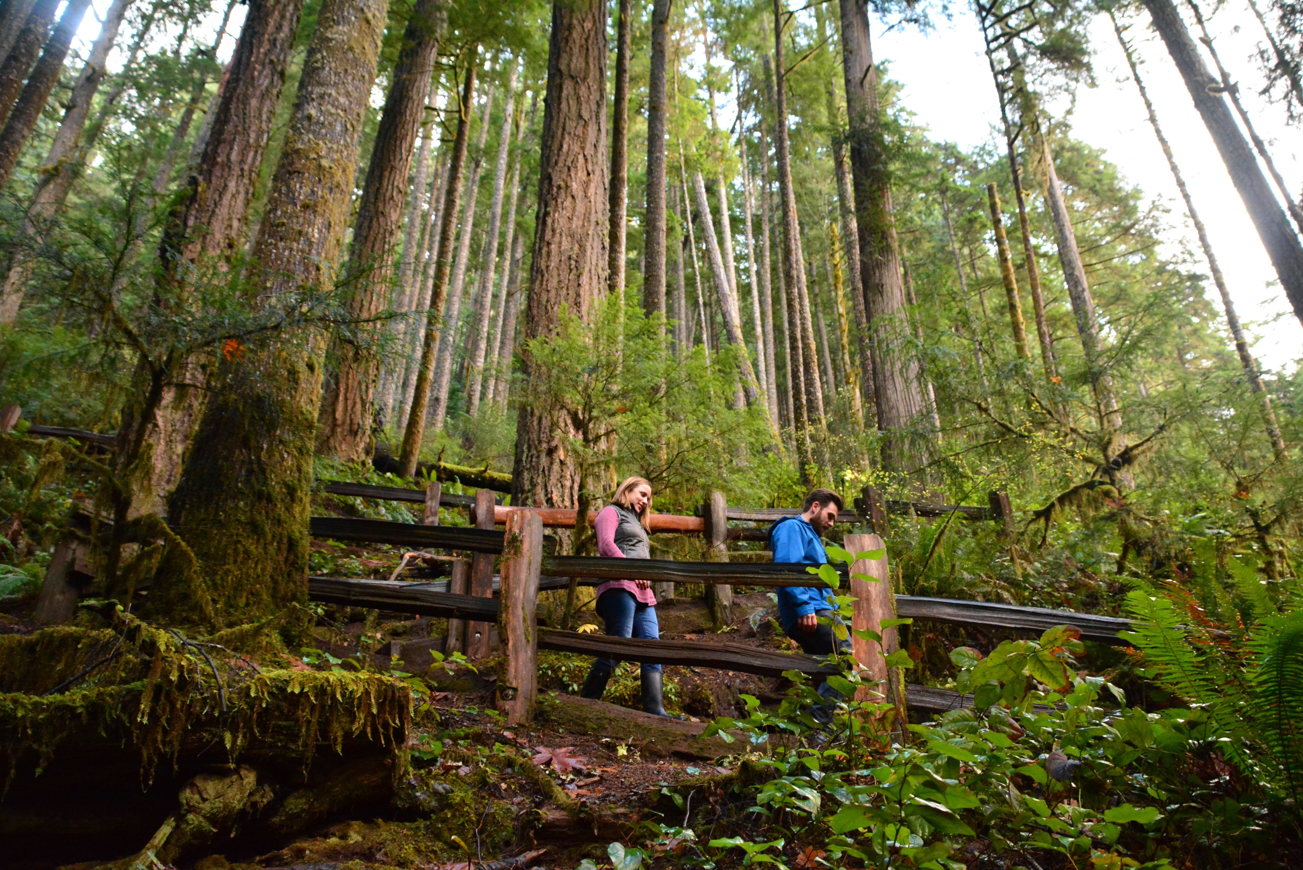 Olympic national parks forest olympic peninsula in for Log cabin resort lago crescent wa